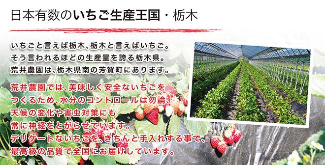 日本有数のいちご生産国・栃木
