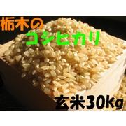 【送料一律700円】【平成22年産】 栃木県産 コシヒカリ 玄米 30kg